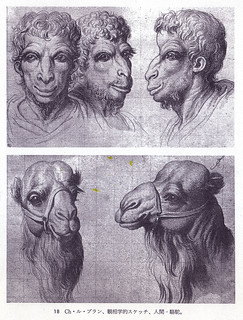 ルブラン-駱駝