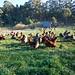 OITF - Santa Cruz - November 2008