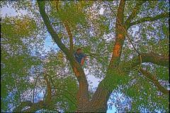 Big Jesse Big Tree