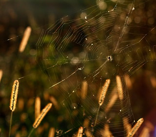 He's got bokeh in his web