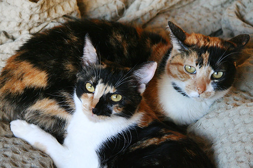 Two Calico Generations!