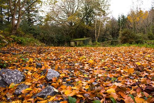 Autumn outpost