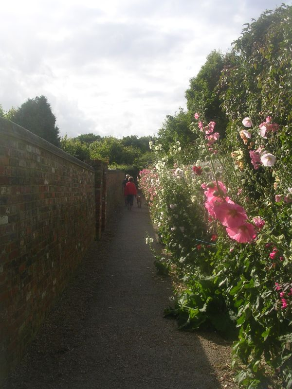 Hollyhock walk Berwick church Lewes to Berwick via West Firle