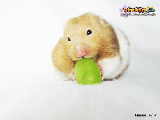 Image Result For Can Hamsters Eat