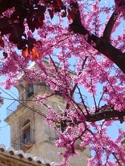 Torre en flor.Alameda-(Málaga)-spain