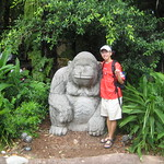 Gorilla and Me