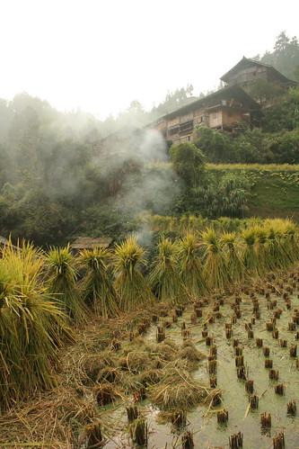 china houses farming villages guizhou kaili
