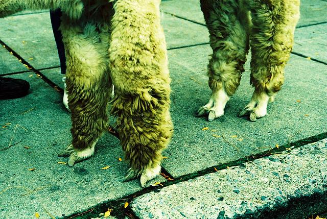 feetses