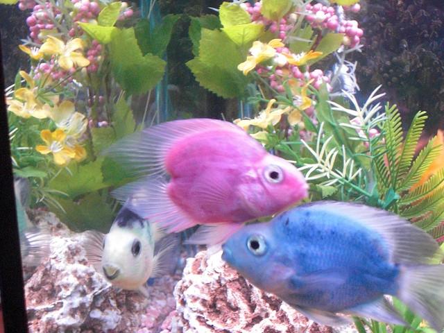 Purple Fish!   Flickr - Photo Sharing!