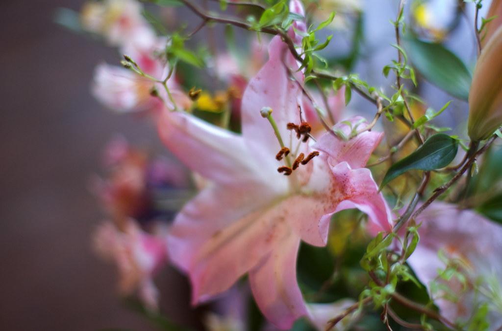 ピンクの花 DSC_1053