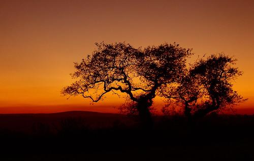 uk sunset england sky tree field night evening unitedkingdom britain nighttime devon gb beacon devonshire westcountry kirton sillohette barnfield crediton breakheart cosdon backsbarn