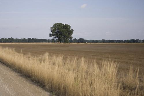 tree field alone missouri mississippiriver lonely foley flooddisasterrelieffloodmissouri