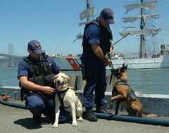dog(1.0), vehicle(1.0), pet(1.0), mammal(1.0), police dog(1.0),