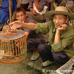 Bird for Sale - Guizhou Province, China