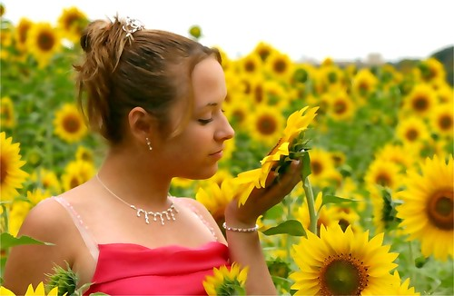 Vanessa In Sunflower Field