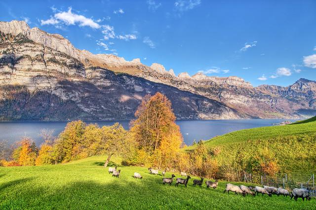 Sheep's paradise