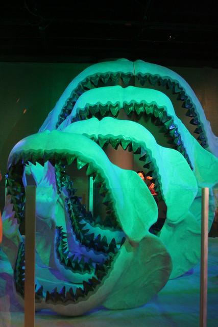 Megalodon Jaws.   Flickr - Photo Sharing!   333 x 500 jpeg 127kB