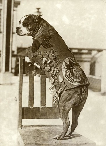 Eerste Wereldoorlog, legerhond sergeant Stubby