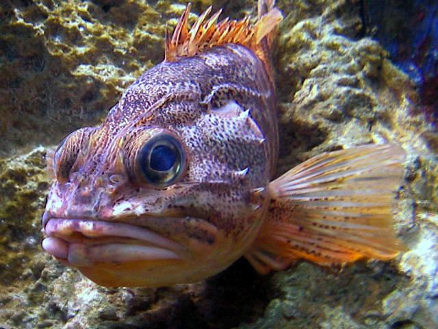 gros poisson plein de couleurs aquarium de biarritz