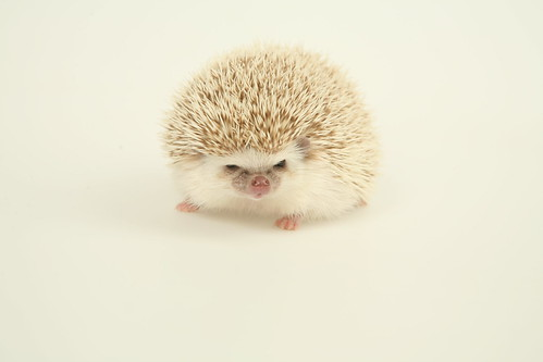 Portrait of the Hedgehog as a Young Man