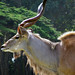 Greater Kudu - Photo (c) James Gaither, some rights reserved (CC BY-NC-ND)