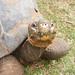 Yummy Grass ( Turtle ) by joshme17
