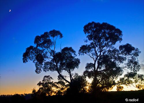 sunrise bush australia victoria moonset golddragon abigfave holidaysvacanzeurlaub