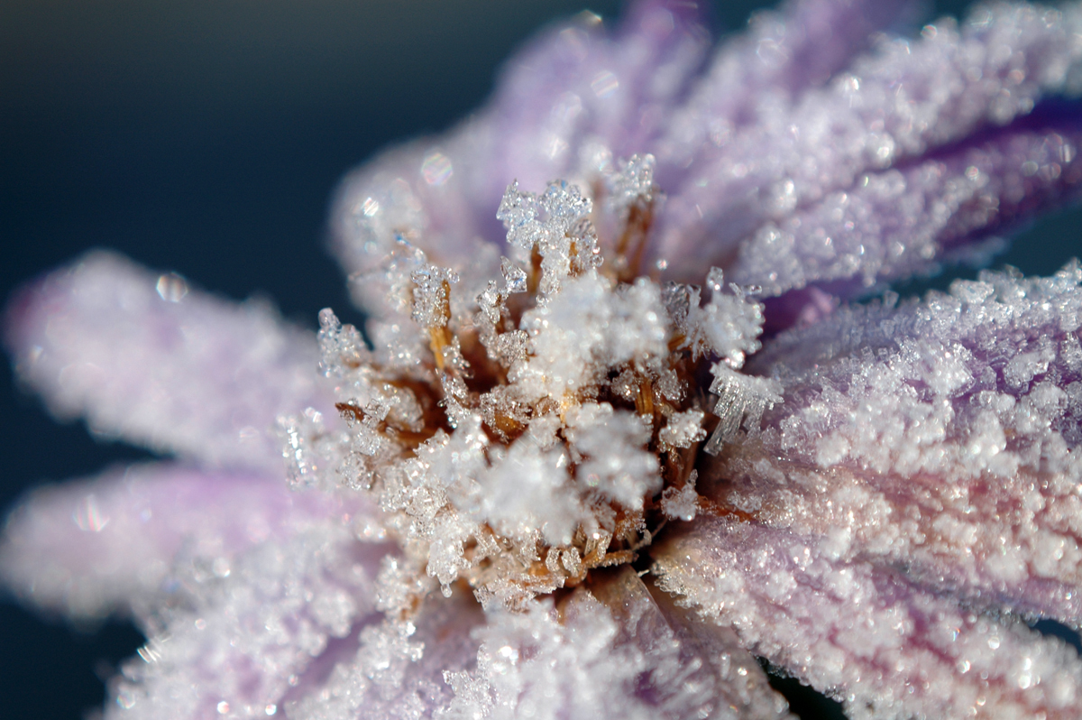 frozen flower it was cold out that day MY MACRO SET By whatisname