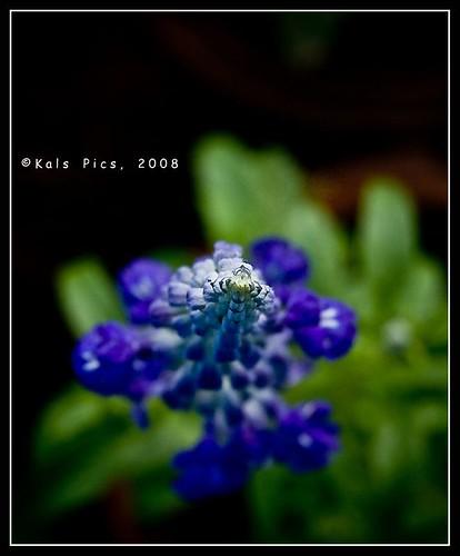 park india flower photoshop view god top violet adobe 1855mm pondicherry lightroom nikond40 ashoknagar lawspet