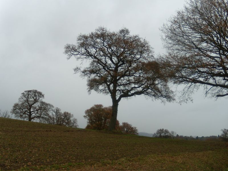 trees Dorking to Reigate