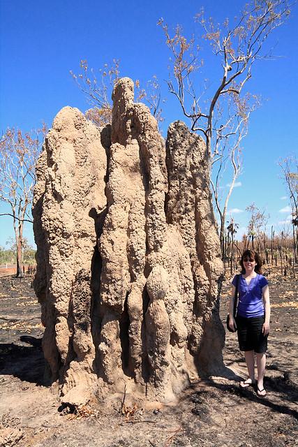 A little termite mound