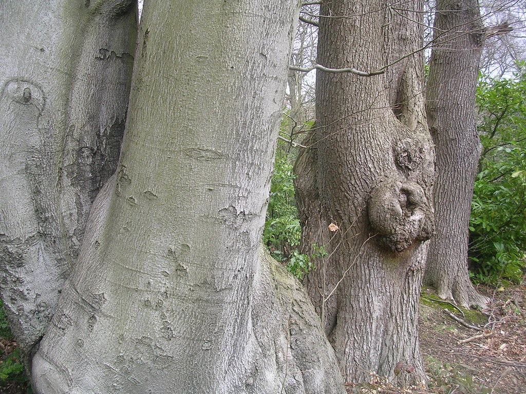 elephantine trunks Upper Warlingham to Hayes