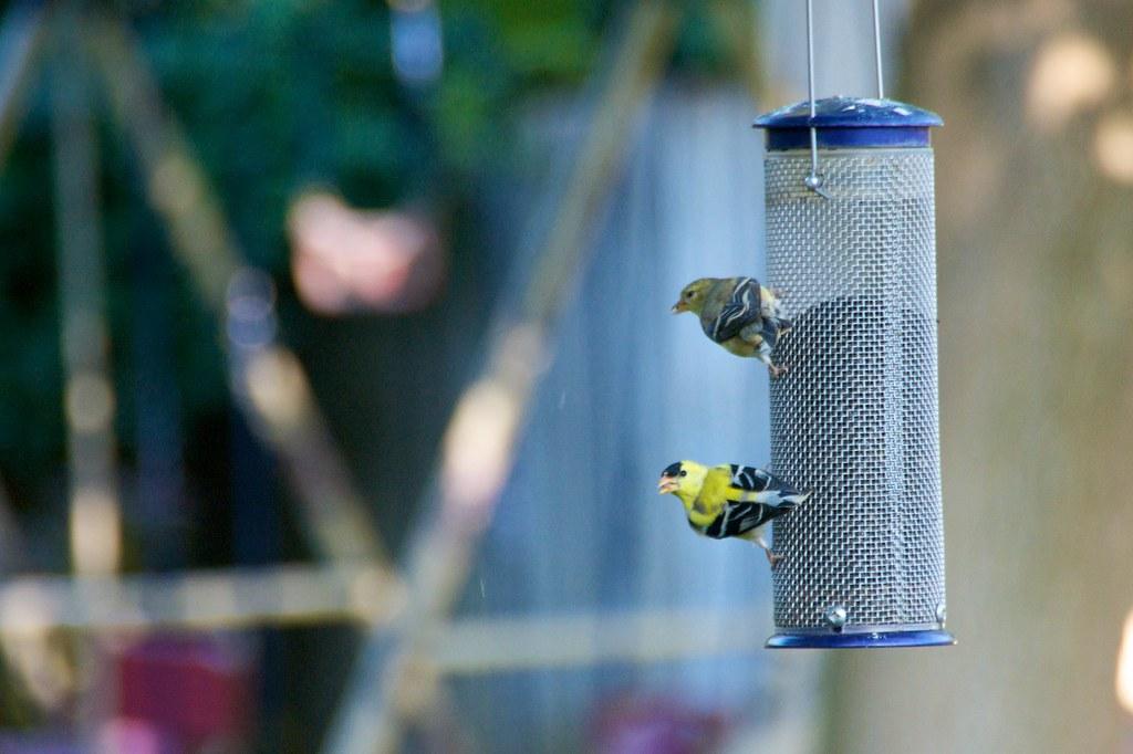 Bird Feeder 1