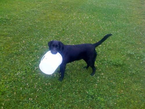 dog training>Puppy