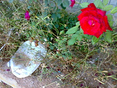 rose and rubbish
