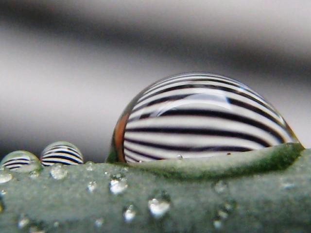 | صور رائعه على مقربه من قطرات المياه مناظر رائعه | 2770967878_eb53a0da80_z.jpg?zz=1