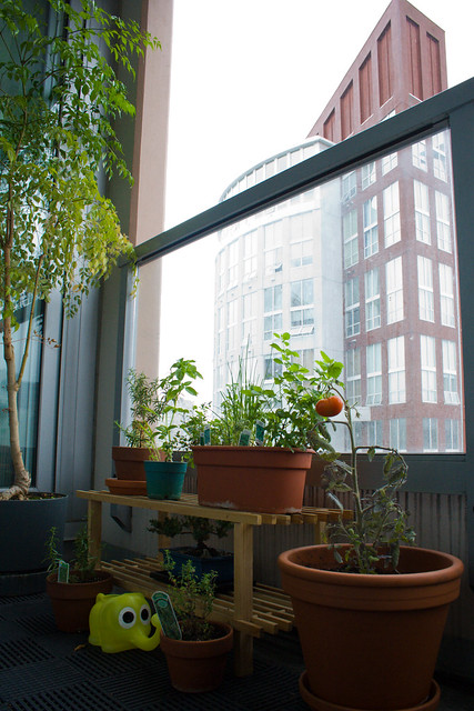 Balcony Bliss: high-rise herb garden | Flickr - Photo Sharing!