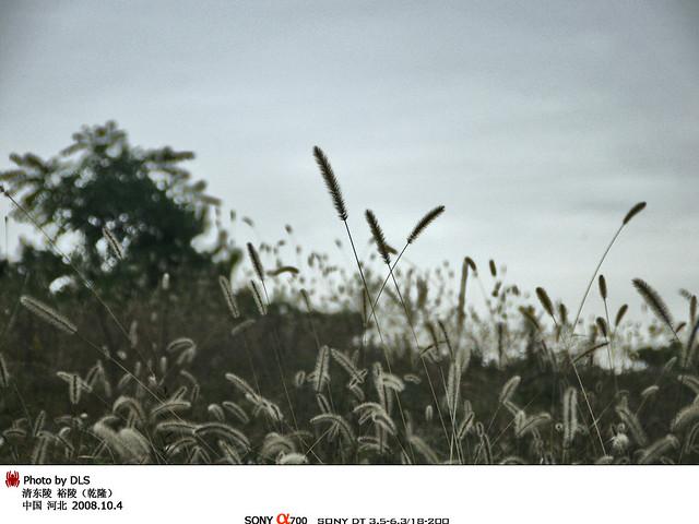 乾隆坟头上的茅草