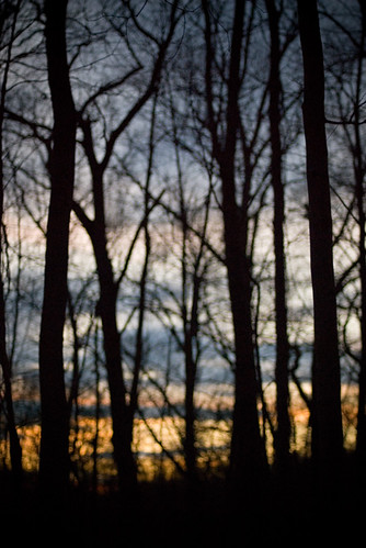 thanksgiving trees blurry woods dusk connecticut branches ct sunsets blurred forests southburyct