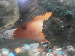 Fish / Reptiles