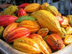 cocoa bean(0.0), cooking plantain(0.0), plant(0.0), calabaza(0.0), vegetable(1.0), produce(1.0), fruit(1.0), food(1.0), winter squash(1.0), cucurbita(1.0), gourd(1.0),
