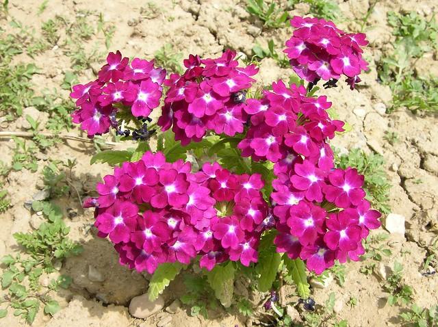Lule Me Te Bukura