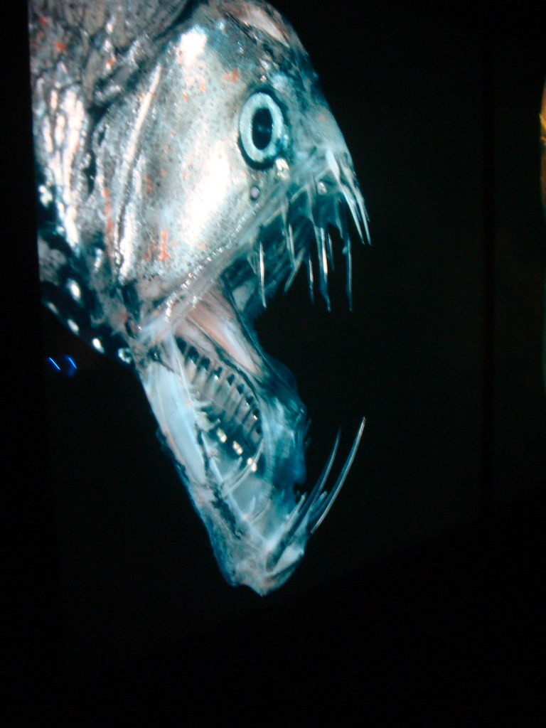 Baltimore Aquarium Related Keywords Suggestions