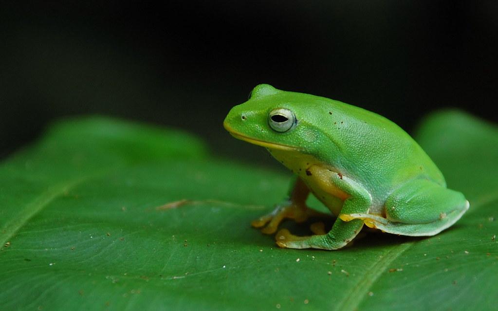 台北树蛙ˋ图片