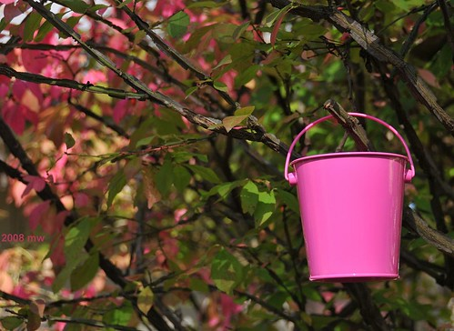In honor of all who fight cancer - a bottomless bucket of good wishes and good fortune - DSC_3429m