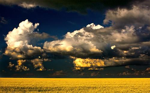 northatlantic theperfectstorm haveagreatday prairieskies canolafields anawesomeshot ruralmanitoba digitalagent vosplusbellesphotos seaofcanola