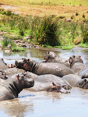Hippo pools, Ngorongoro