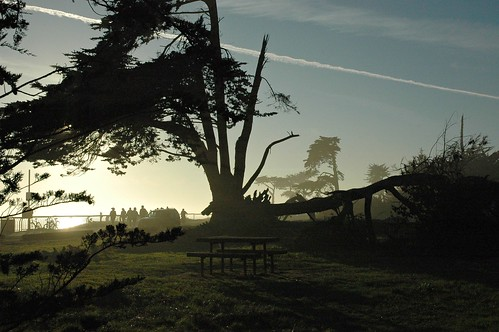 Slip Stream Tree, Bench, Santa Cruz, California, USA