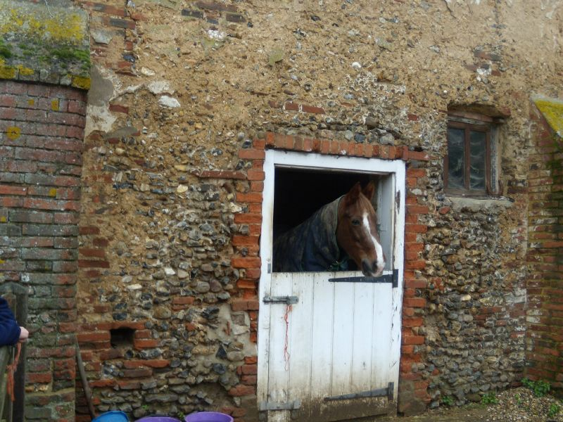 Horse that lives next to the old chapel Kelvedon circular