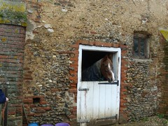 Horse that lives next to the old chapel